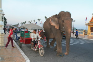 81_kambodza_phnompenh_slon