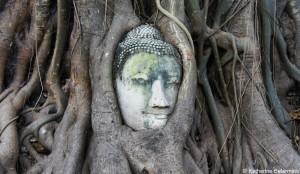 Ayutthaya Tree Buddha